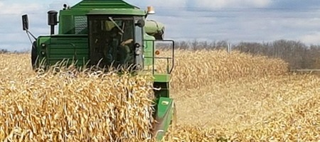 Close up of combine harvesting corn