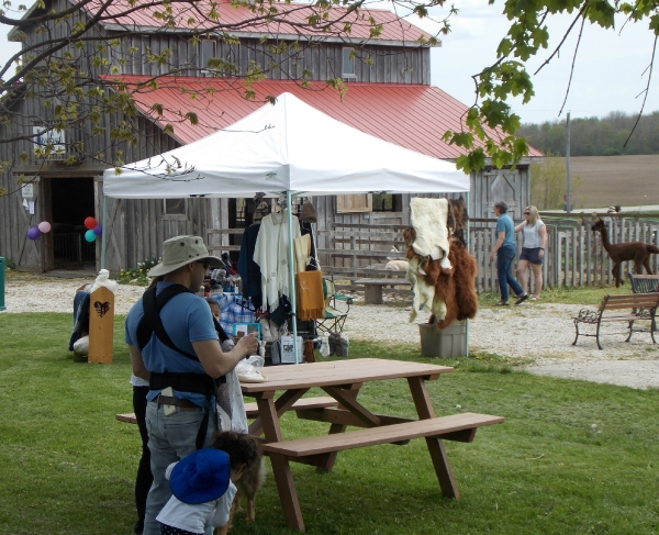 Previous event at Mapleton's showing alpaca display.