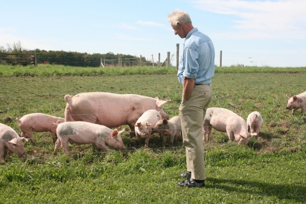Martin visiting the pigs on pasture.