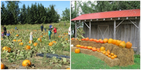 Collage - pumpkin patch and pumpkin display